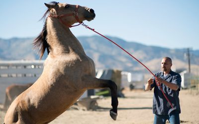 "Movie Review: ""The Mustang"""