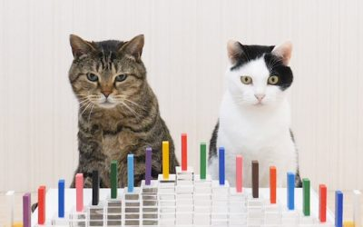 POTD: Cats and Dominoes