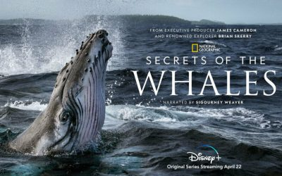 "TV Review: ""Secrets Of The Whales"""
