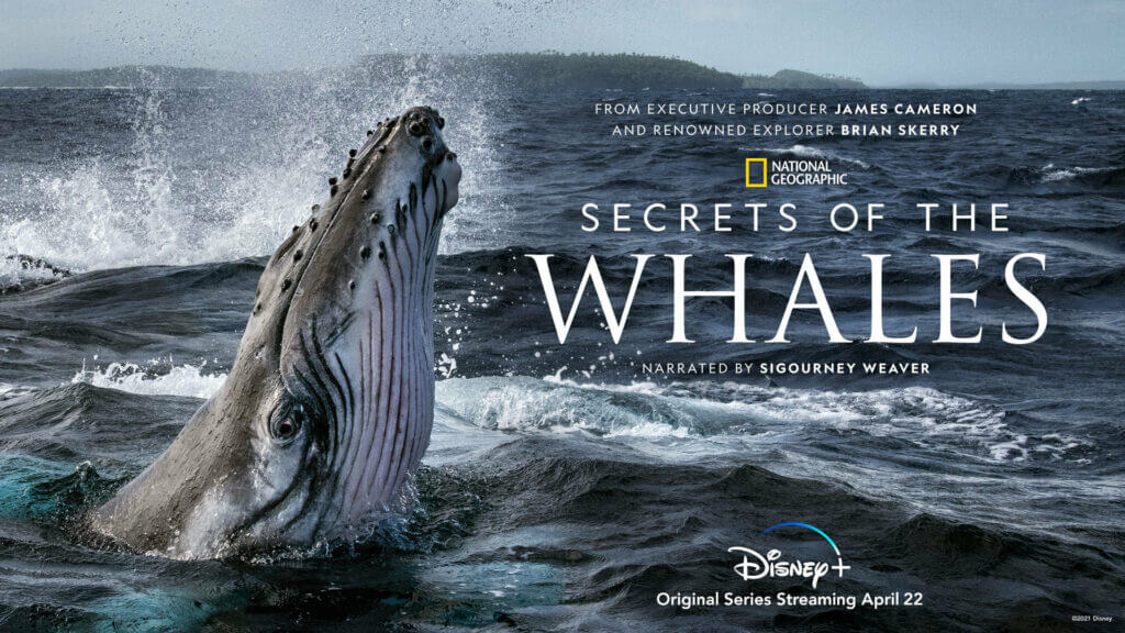 """TV Review: """"Secrets Of The Whales"""""""